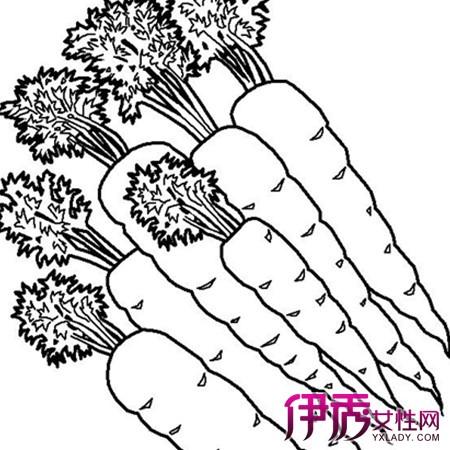 【图】胡萝卜简笔画图片大全 揭秘简笔画绘画的3大技巧-彩旗简笔画图