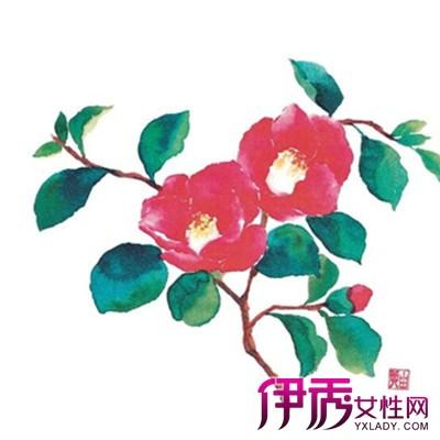 【手绘山茶花】【图】手绘山茶花图片欣赏