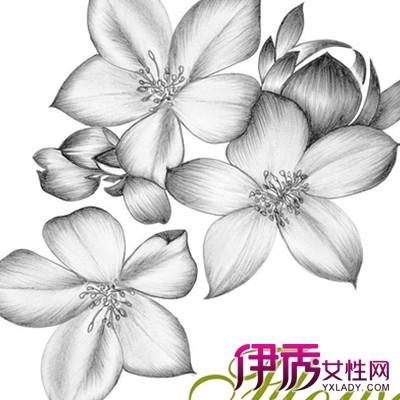 【图】手绘山茶花图片欣赏 教您马克笔作