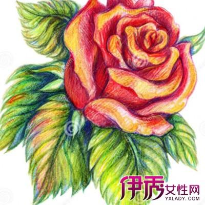【绘画玫瑰】【图】欣赏好看的绘画玫瑰图片