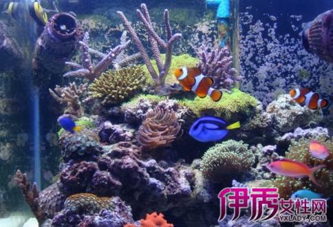 壁纸 海底 海底世界 海洋馆 水族馆 484_330