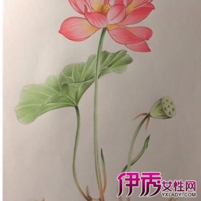 【图】手绘荷花彩铅画图片欣赏 彩铅的基础技法介绍