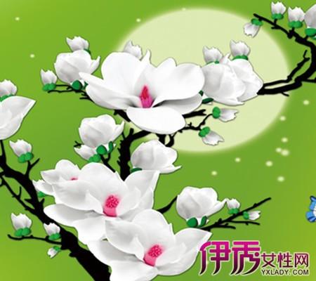 【图】手绘玉兰花作品鉴赏 图画是设计师的语言