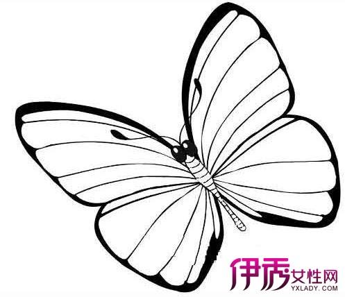 【图】怎样画蝴蝶好看 2种画法教你学会