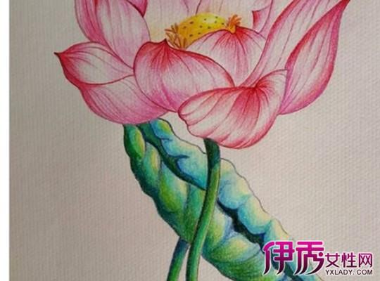 【图】彩色铅笔画荷花图片大全 盘点彩色荷花的画法
