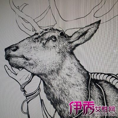 【图】鹿角手绘图片大全 手绘的艺术价值鉴赏