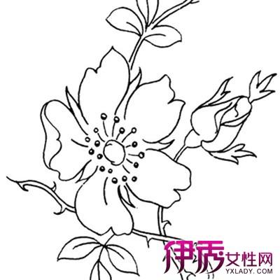 【图】桃花手绘图片欣赏 6步教你如何用马克笔作桃花手绘
