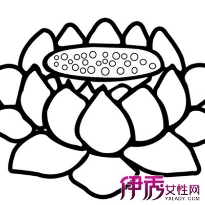 【图】手绘莲花简笔画的图片欣赏 从手绘的行业现状来了解手绘