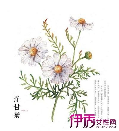 【图】手绘插画花卉大全 花语轻轻诉