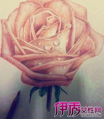 【图】玫瑰彩铅手绘花朵图片 九步学会画花的技巧
