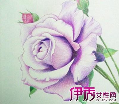 【彩铅手绘花】【图】玫瑰彩铅手绘花朵图片