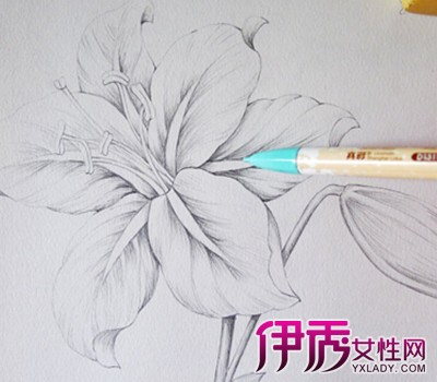 【图】素描手绘花朵图片简笔画 几分钟教你学会素描
