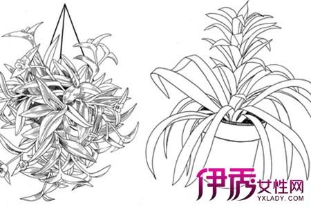 【盆栽手绘】【图】盆栽手绘图片欣赏