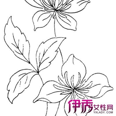 【图】欣赏黑白手绘插画花图片 2个技巧教你如何快速完成一个作品