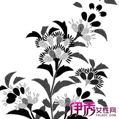 【黑白手绘插画花】【图】欣赏黑白手绘插画花图片