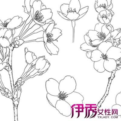 【图】欣赏黑白手绘插画花图片