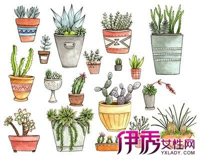 【图】手绘盆栽图片欣赏 3大技巧教你立即学会绘画