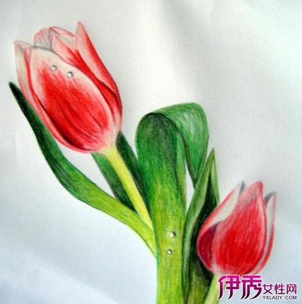 【图】郁金香手绘图片