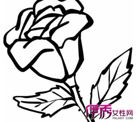 彩铅画玫瑰花简笔画 宁静的手绘时光