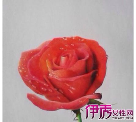 【图】彩铅画玫瑰花简笔画 宁静的手绘时光