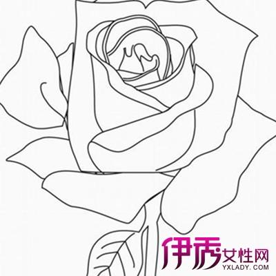 【图】素描玫瑰花的画法步骤介绍