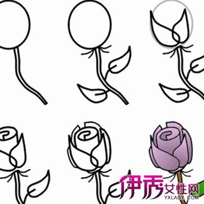 【素描玫瑰花的画法步骤】【图】素描玫瑰花的画法-玫瑰素描画法步图片