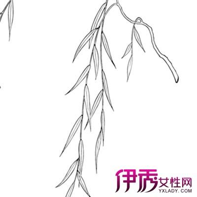 【柳树手绘】【图】美丽的柳树手绘