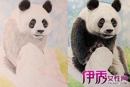【图】手绘插画简洁教程分解 软萌熊猫彩铅四步画出来