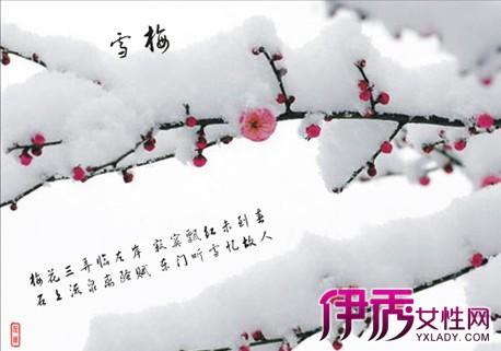 【图】冬天雪压梅花的诗句有哪些? 古代梅花诗词赏析