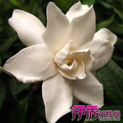【图】形容白色花的词语有哪些 坚强高雅的梅花图片