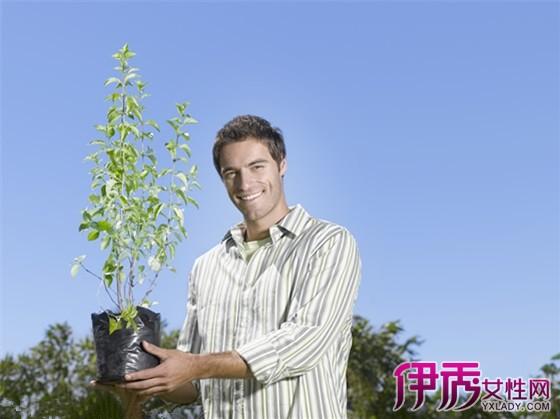 大叶紫堇,鸡血七,地锦苗
