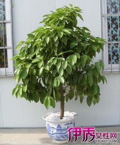 适合在家养的植物图片及名称 介绍3大适合家养植物