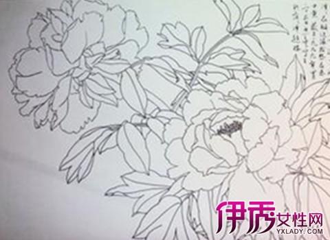 【图】牡丹花图片白描画展示 边欣赏牡丹画边深入了解其特征