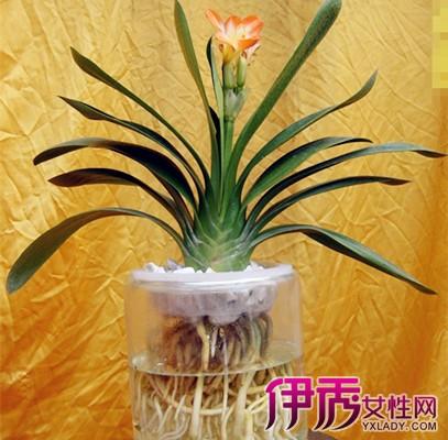 适合家养的花卉图片及名称大全 推荐三种家养花卉