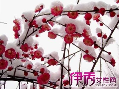 【图】梅花树终于开花啦 带你一起走进花海慢慢观赏