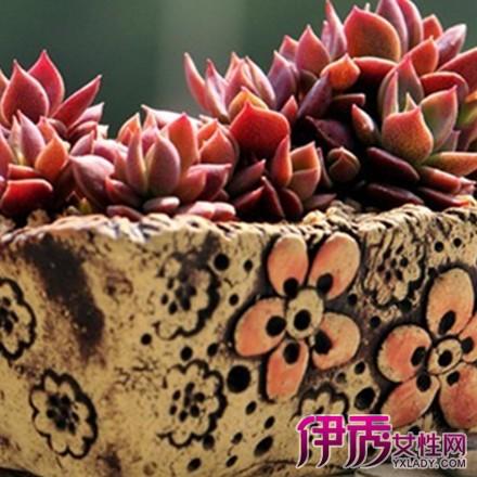 【图】韩国多肉植物图鉴图片欣赏 为你介绍多肉植物的5种分类