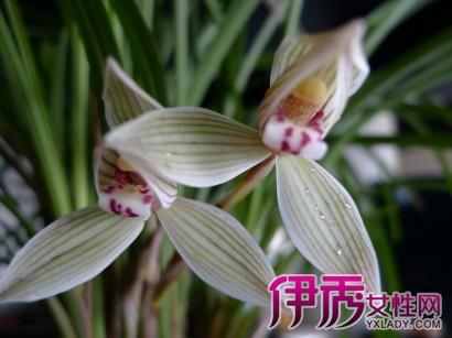 名贵兰花品种图片大全 我国主要名种兰花的特征及辨认方法