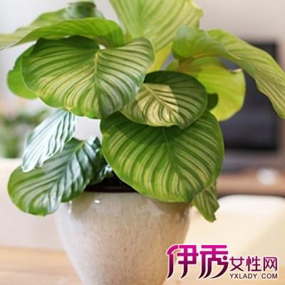 【图】了解观叶植物的形态特征 四点正确的选用知识为你装扮居室