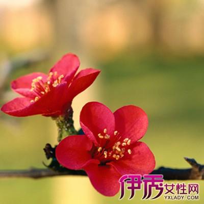 彩铅画图片大全梅花山展示