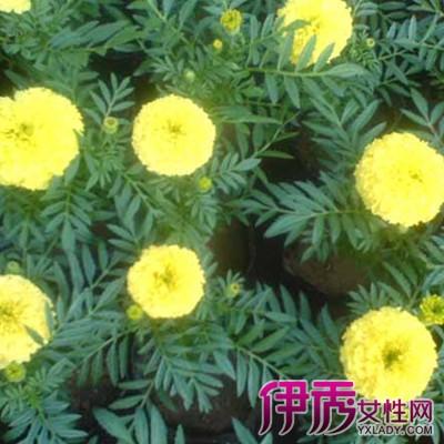 常见花卉图片及名称介绍 展示各种花卉的功效作用