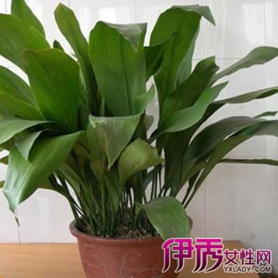 家养花卉图片及名称 告诉你17种室内养殖的花卉
