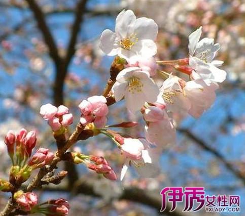 【图】梅花几月份开花