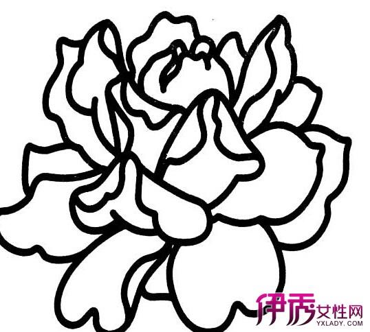【图】牡丹花图片简笔画步骤 轻松学会国花画法