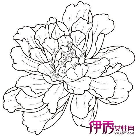 牡丹花图片简笔画步骤 轻松学会国花画法
