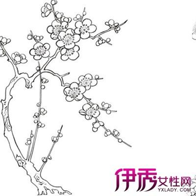【图】梅花简笔画图片大全 详解梅花种植方法