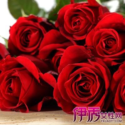 【玫瑰花图片大全】【图】玫瑰花图片大全欣赏图片