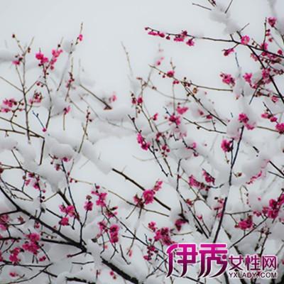 【图】梅花雪景图片欣赏 4个方法教你种植梅花