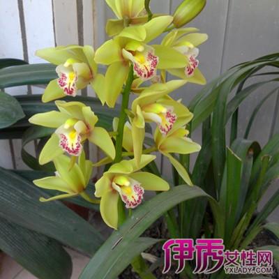 【图】兰花品种鉴别图谱展示