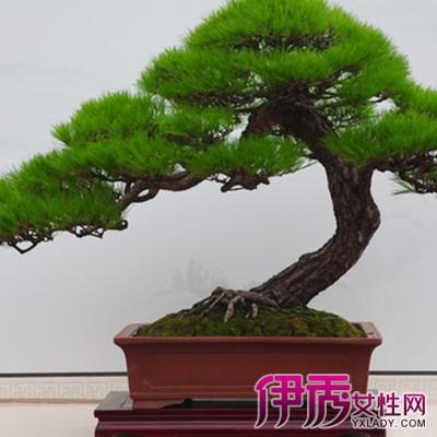 【图】精美的珍稀杂木树桩盆景 三大组成要素要注意