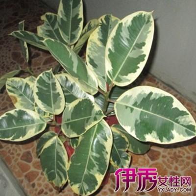 植物果实图片名称,想知道这种植物是什么